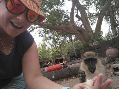 Diverse wilde und zahme Affen