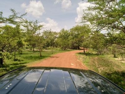 Die Aussicht während der Safari. Dank dem ersten Regen vor ein paar Wochen war alles grün, herrlich Frühlingshaft bei 30°