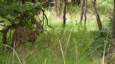 Eine von vielen Antilopenarten